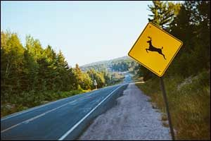 Oh Deer! What to Do? New Bedford Car Insurance in an Accident